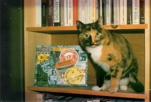 Cat in bookcase